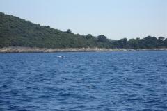 Zatoka & Delfiny