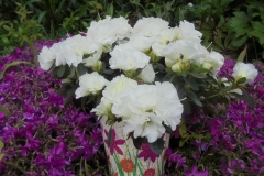 Osłonka_kwiaty