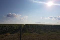 okolice Hroznová Lhota