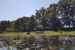 Wełna - osły