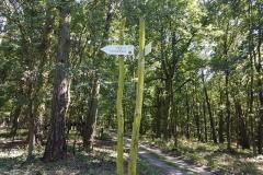 Trasa wWielkopolskim Parku Narodowym