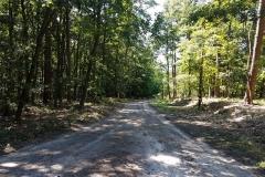 Trasa w Wielkopolskim Parku Narodowym